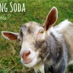Baking Soda… for Goats?