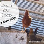 How to Clean and Disinfect Your Chicken Coop (without chemicals)