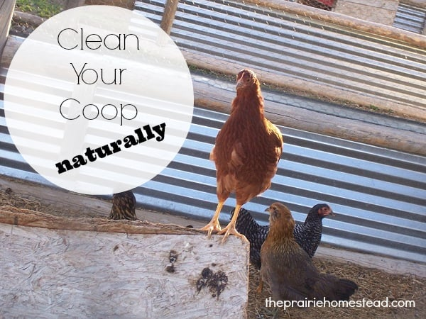 naturallycleanchickencoop