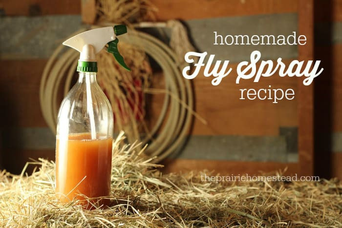 Homemade Fly Spray Recipe | The Prairie Homestead