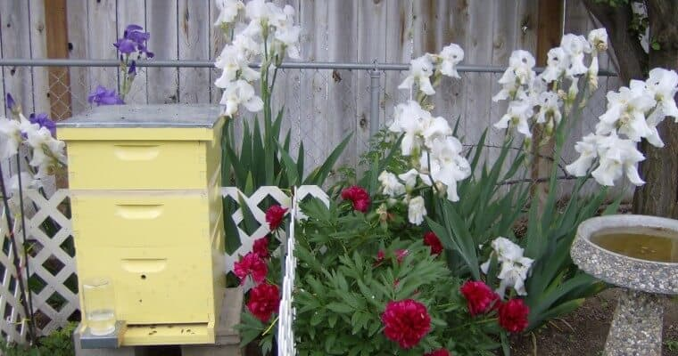 An Urban Beekeeping Adventure