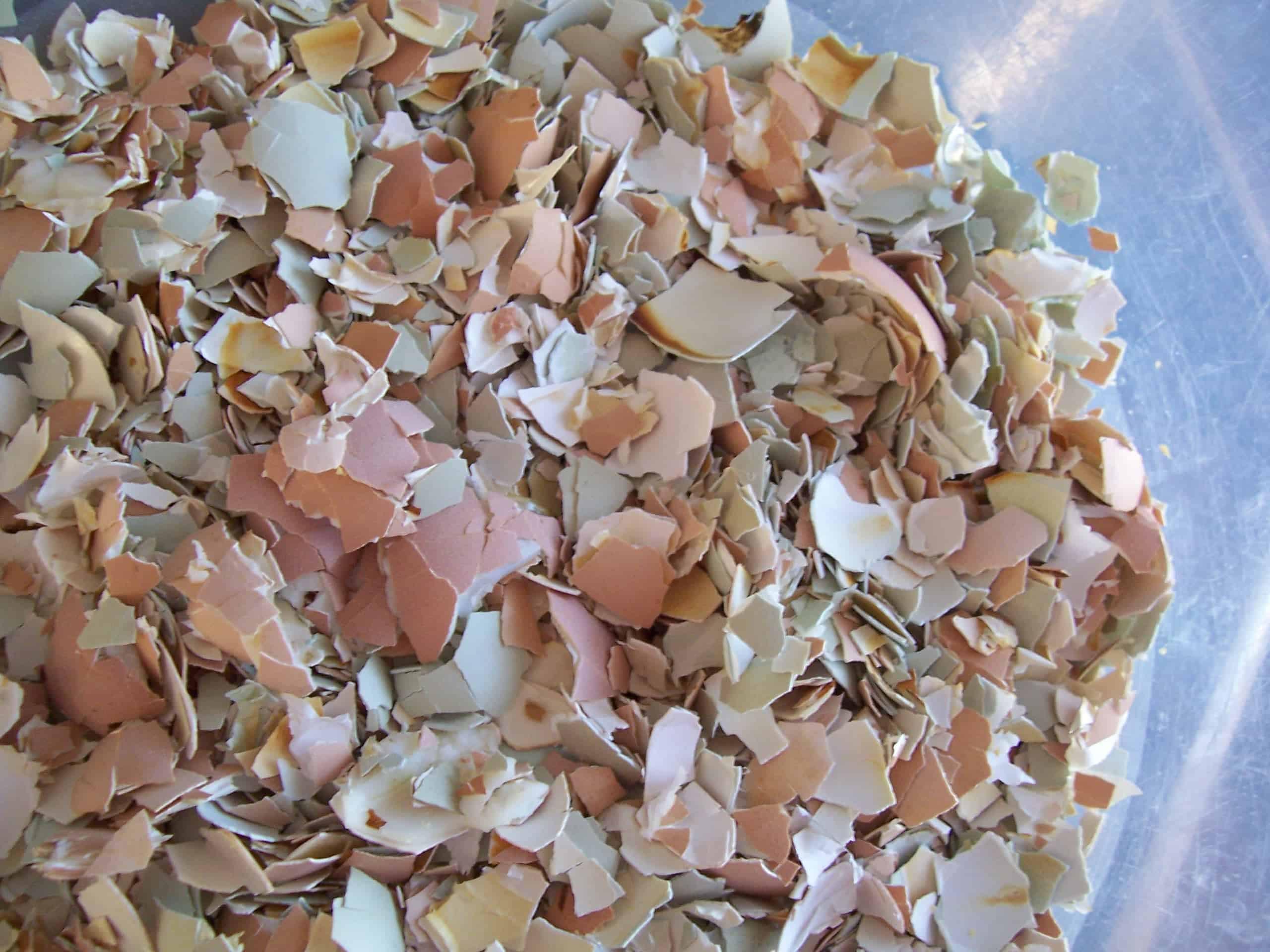 How to feed eggshells to chickens the prairie homestead the shells after being baked and crushed forumfinder Choice Image