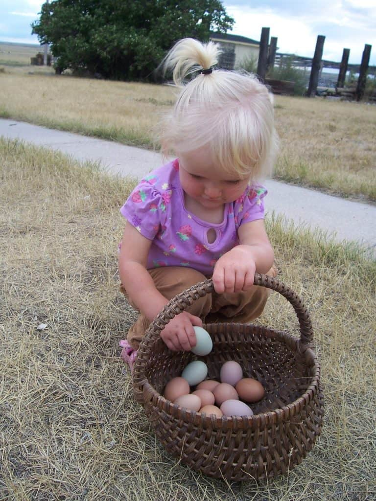 Eggs: To Wash or Not to Wash? • The Prairie Homestead
