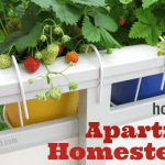 How to be an Apartment Homesteader