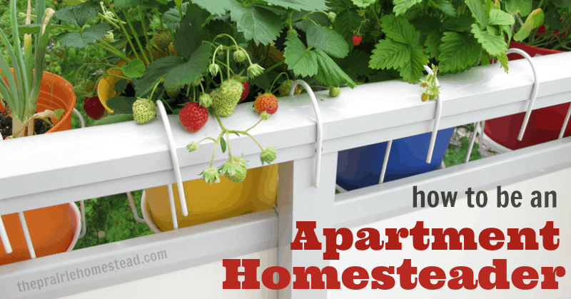 how to homestead in an apartment