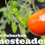 How to be a (Suburban or Urban) Homesteader