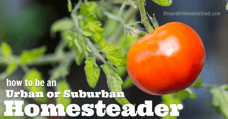 urban suburban homesteading