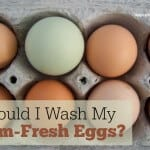 Eggs: To Wash or Not to Wash?