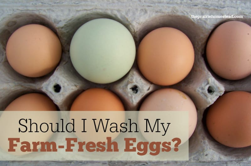 should I wash eggs
