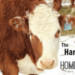 The Hard Part of Homesteading