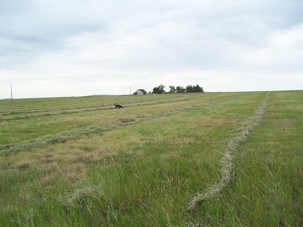 Haying our pasture- 2011