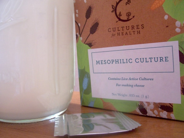 Mesophilic culture for homemade cream cheese