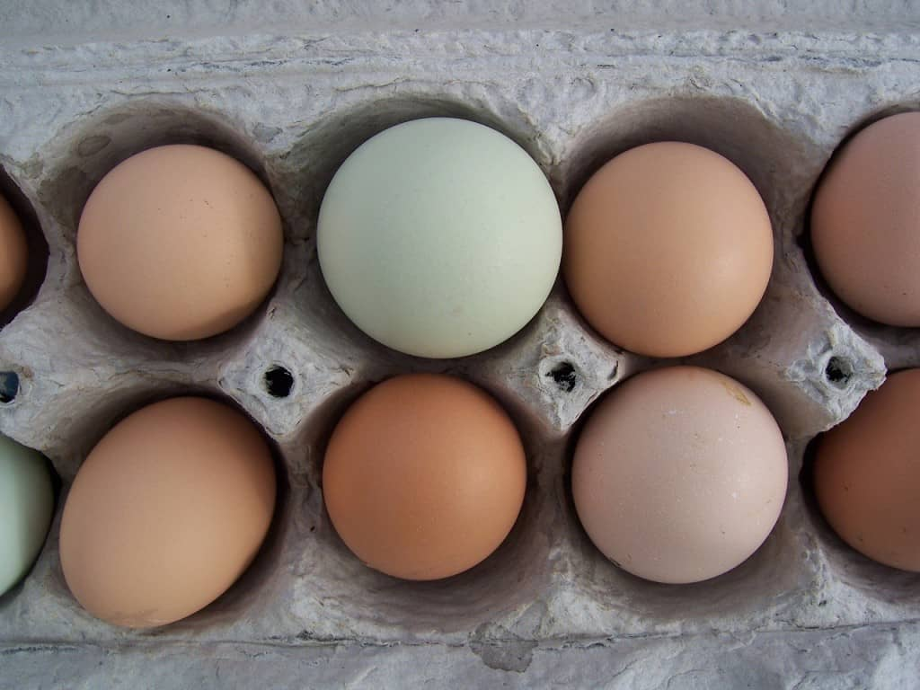 should you wash eggs?