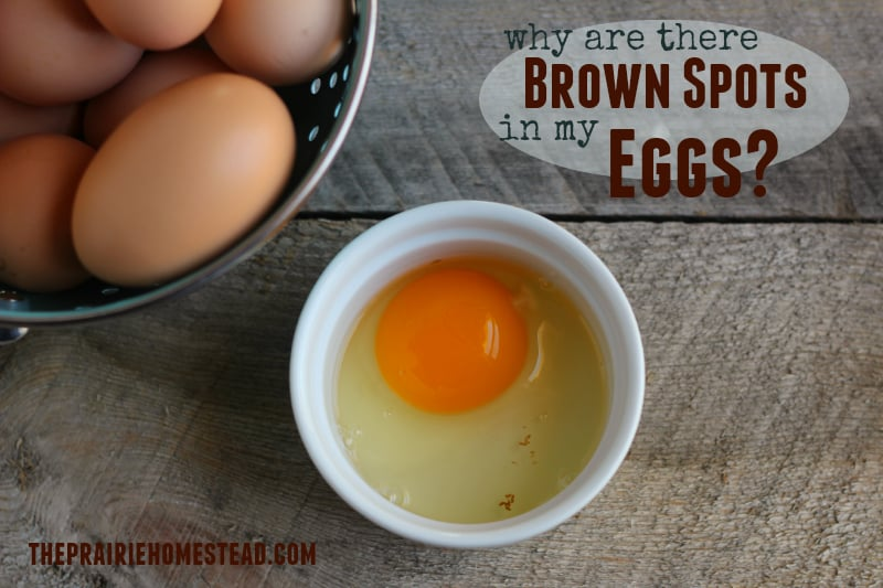 brown spots in eggs