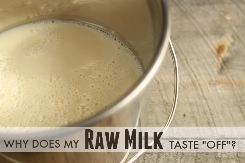 off-flavors-in-raw-milk