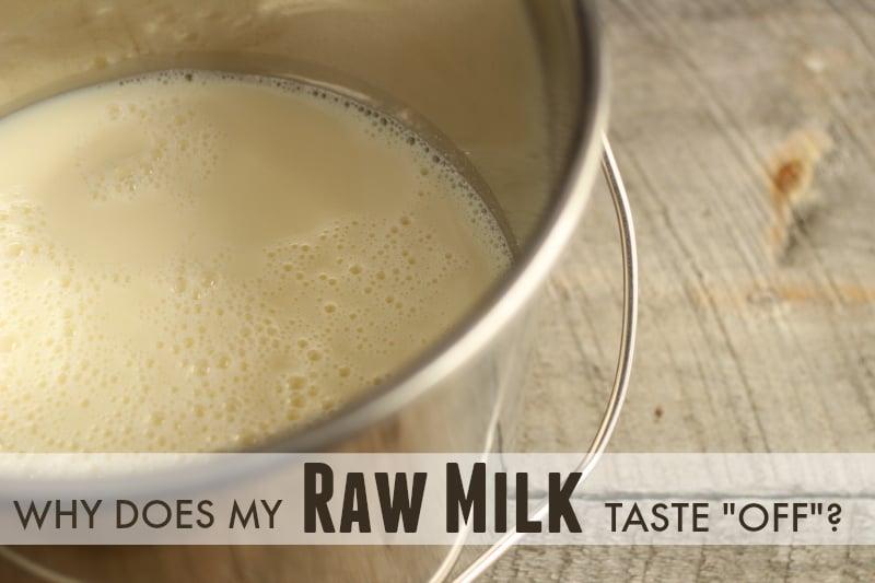 off-flavors-in-raw-milk