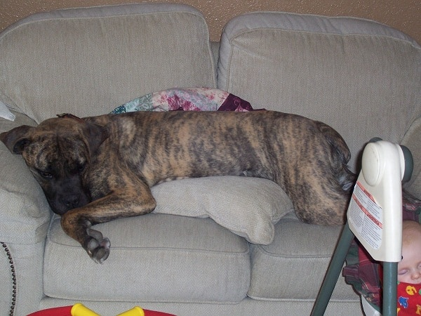 I wouldn't dream of letting a dog up on the furniture...