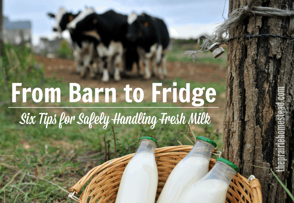 7e26752acd852 From Barn to Fridge  6 Tips for Safely Handling Raw Milk • The ...