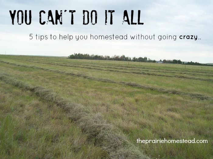 homesteading self sufficiency