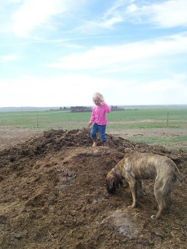 Playing on the manure pile...