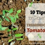 10 Tips for a Tremendous Tomato Harvest