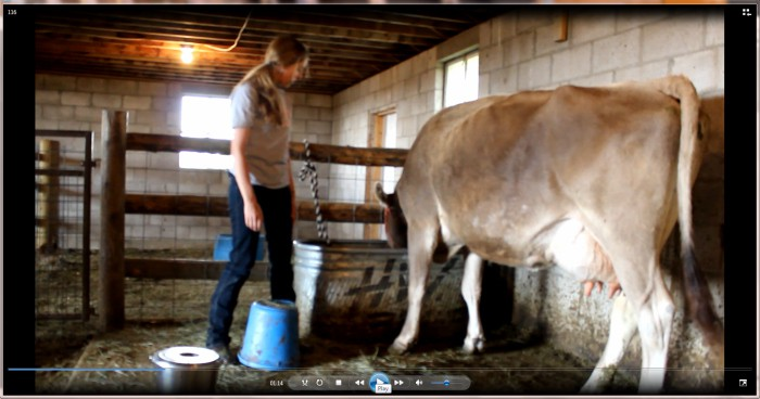 A scene of my not-so-successful video shoot with the milk cow...