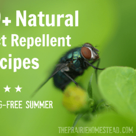 homemade insect repellent recipe