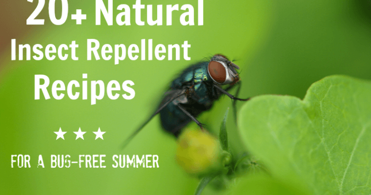 20+ Homemade Insect Repellent Recipes
