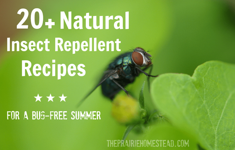 natural diy bug spray