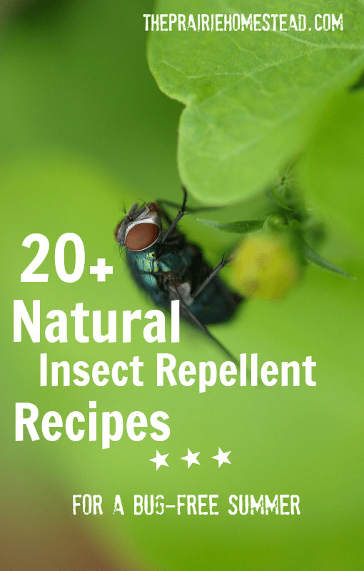Natural Homemade Insect Repellent For Dogs