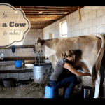 How to Milk a Cow (Special Video Post!)