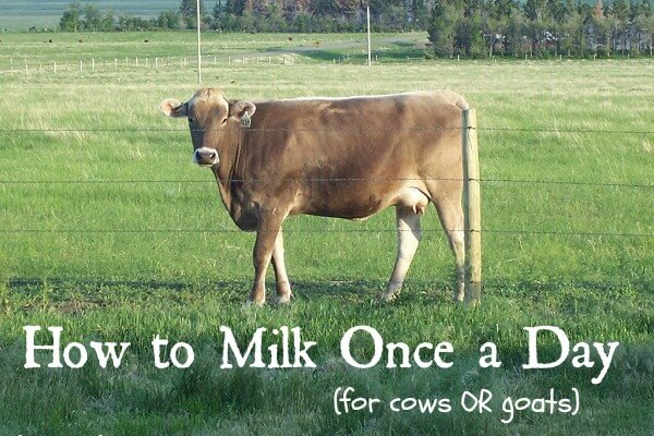 The Great Home Dairy Round-Up (20+ posts to get you milking!)