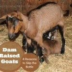 Dam Raised Goats: 4 Reasons to Skip the Bottle