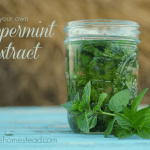 DIY Mint Extract- Perfect for Homemade Gifts!