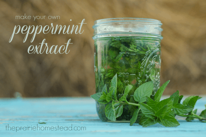 A simple mint extract recipe