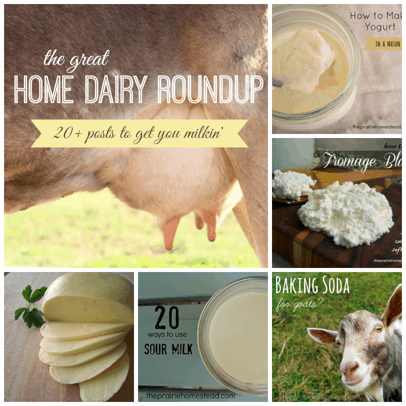 home dairy milk cow