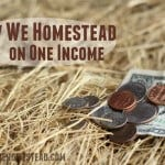 How We Homestead on One Income (Part Two)