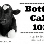 Bottle Calf 101: 5 Tips for First-Time Bottle Calf Mamas