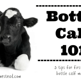 10 Tricks to Stop Your Milk Cow from Kicking • The Prairie
