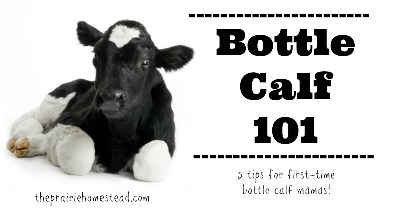 Bottle Calf 101: 5 Tips for First-Time Bottle Calf Mamas • The ...