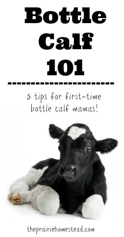 how to raise a bottle calf