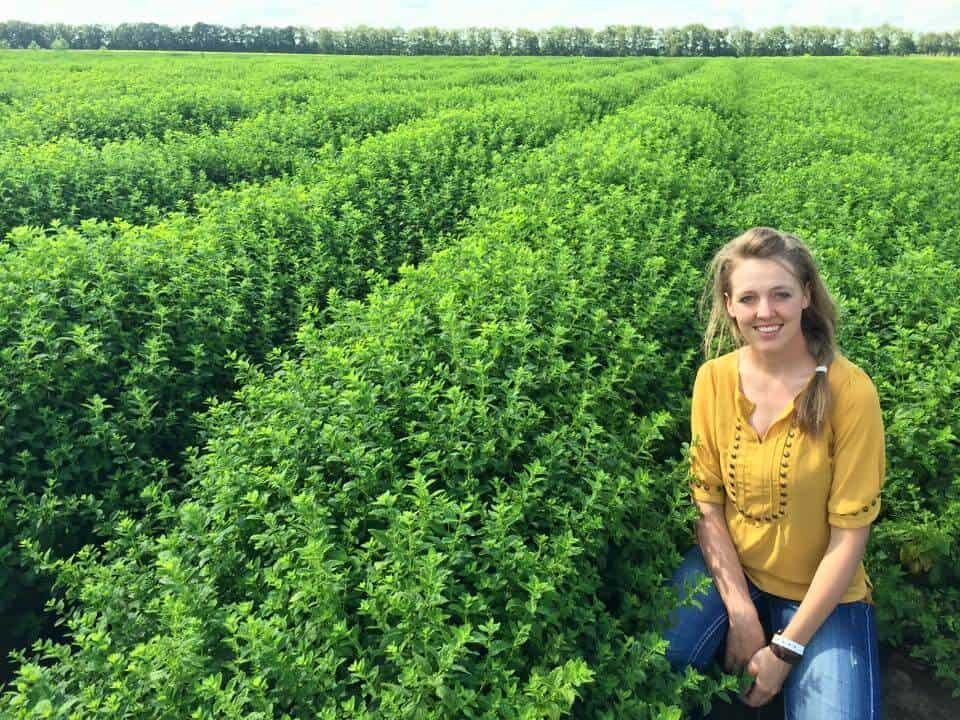 Jill with doTERRA in Bulgaria, visiting a melissa (lemon balm) field