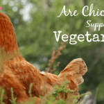 Are Chickens Supposed to be Vegetarians?