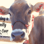 Owning a Family Milk Cow: Your Questions Answered!