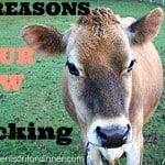 10 Reasons Why Your Milk Cow Might be Kicking