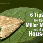 6 Ways to Keep Miller Moths Out of Your House