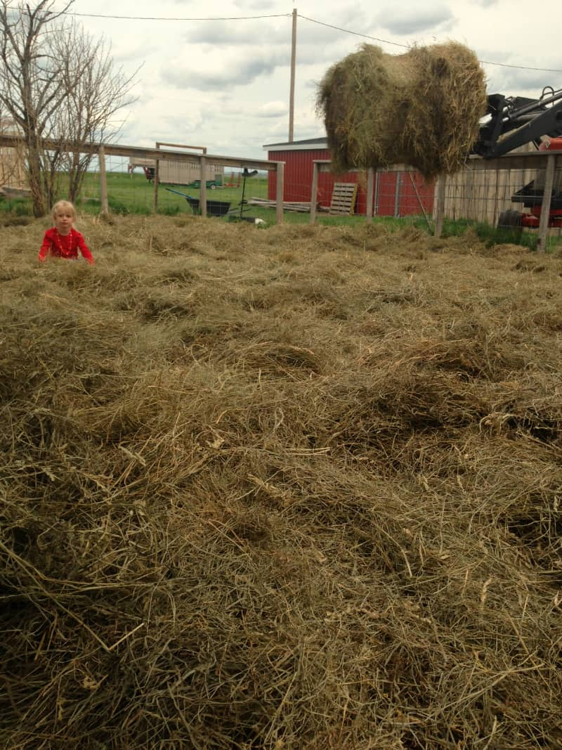 How to Use Deep Mulch on Your Garden: Do kids grow better with mulch too?