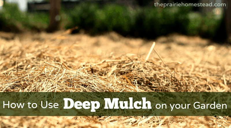 how to use the deep-mulching method in your garden • the prairie, Garten ideen
