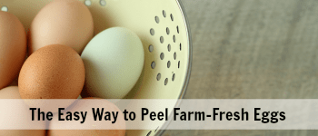 How to Peel Fresh Hard Boiled Eggs