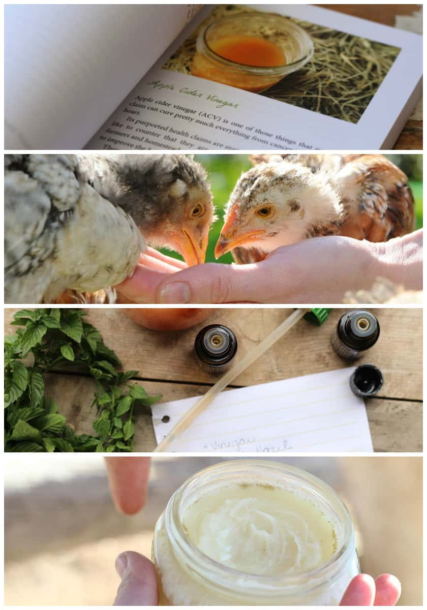 natural homesteading recipe book